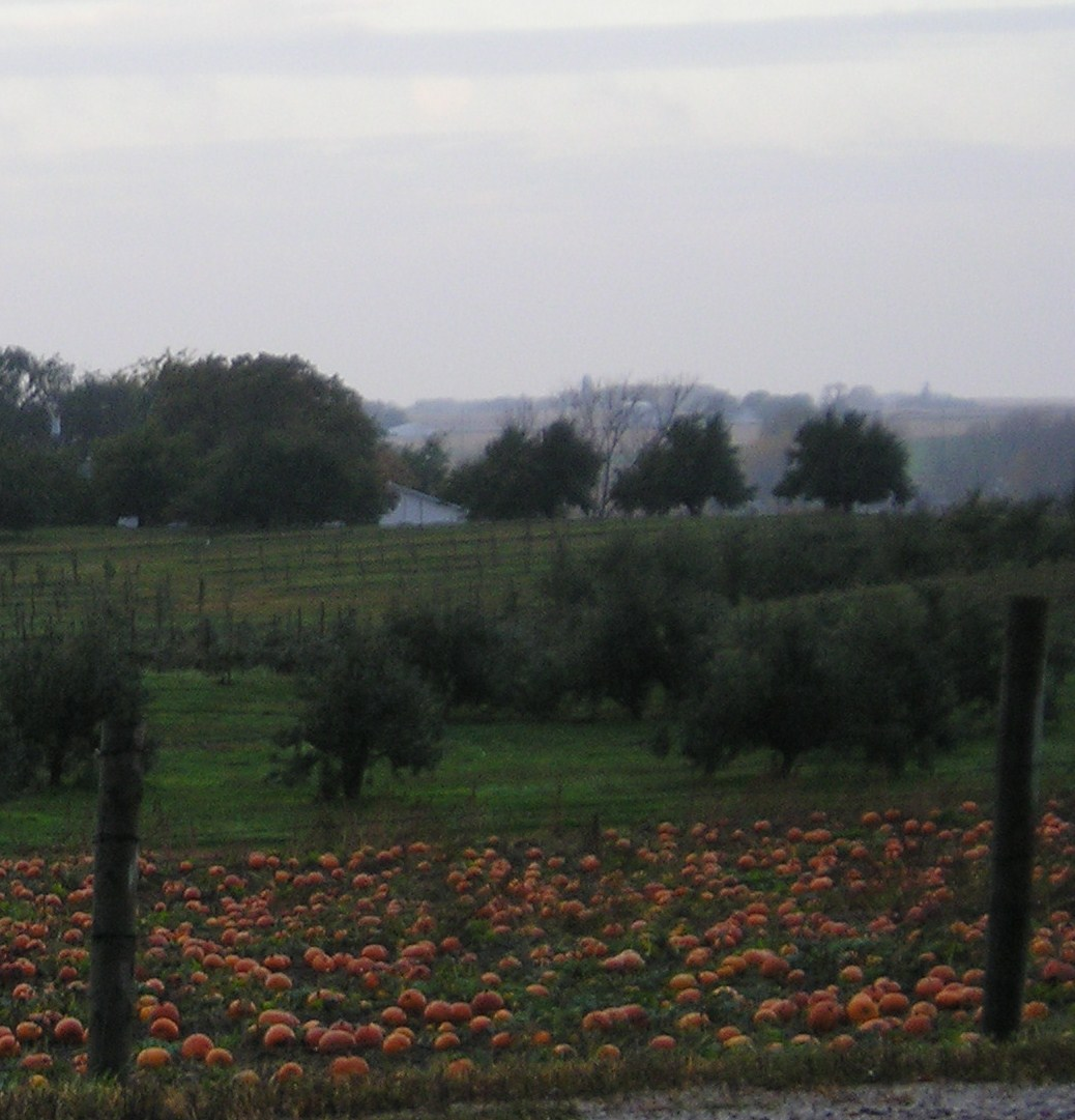 Pumpkin Patch @ the Apple Orchard